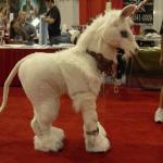 Unicorn Cosplay