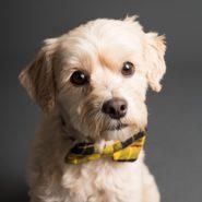 shallow focus photo of long coated dog